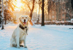 Dog Grooming Tips for Winter