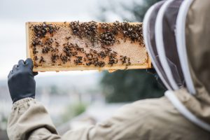 Beekeeping in the Winter