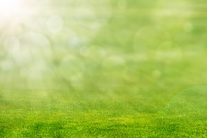 5 Easy Tips for the Perfect Lawn