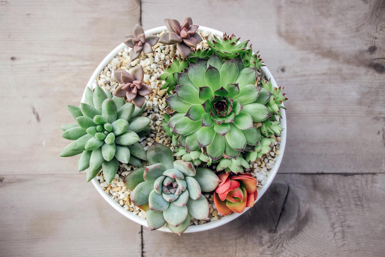 How To Plant A Succulent Bowl Blain 39 S Farm Fleet Blog