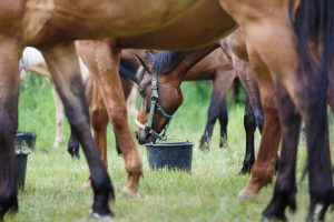 What's the Shelf Life of Horse Feed?