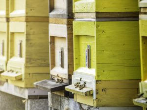 How Many Beehives Should I Start With?