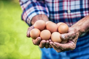 7 Myths About Chicken Eggs