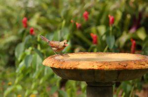 10 Common Backyard Birding Mistakes