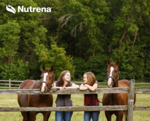 Why are Amino Acids for Horses Important