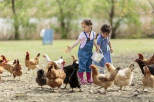 Supplementing Your Chicken's Diet