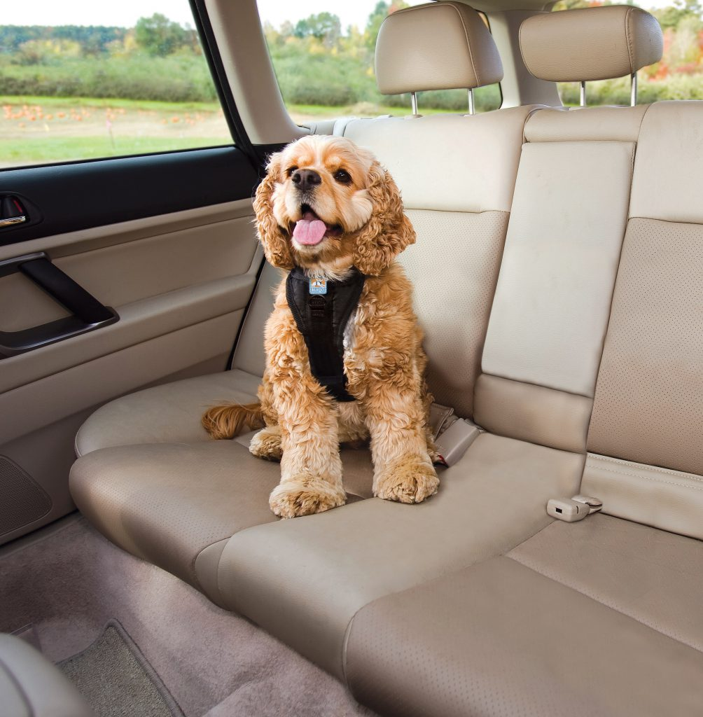 Tackling Your Dogs Car Anxiety