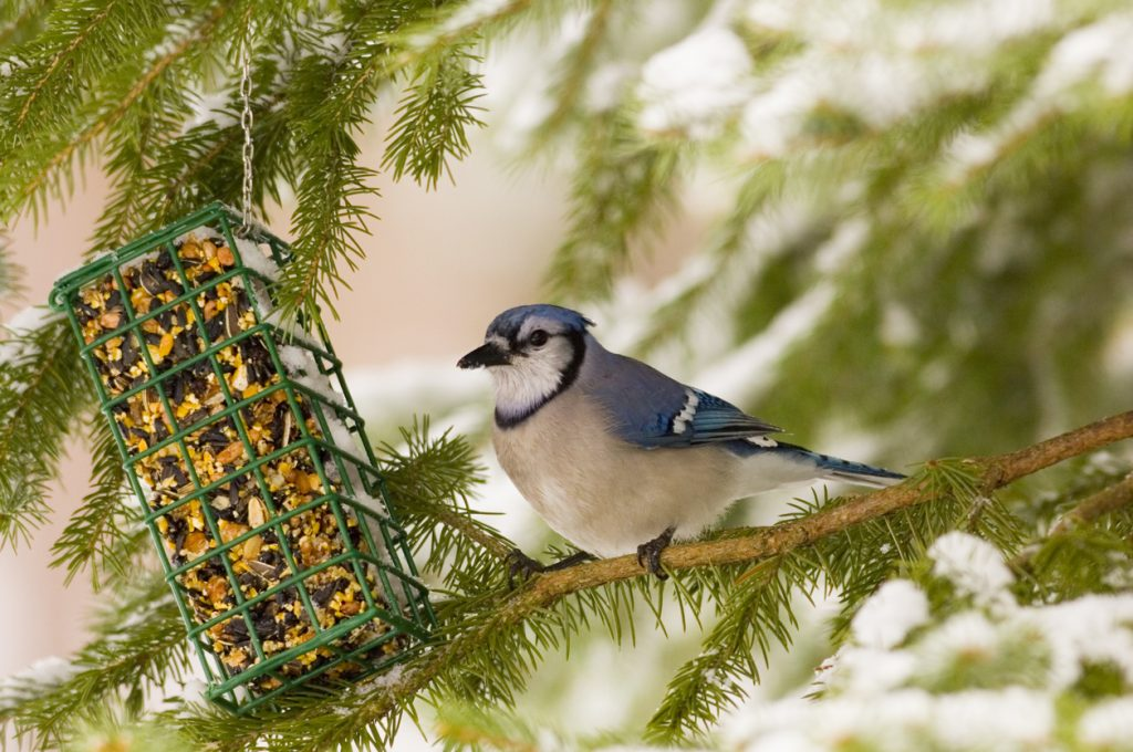 9 Types of Bird Seed For Your Backyard