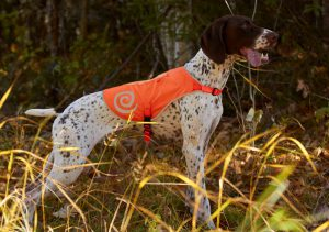 Keep Your Dogs Visible & Safe With Ultra Paws Gear