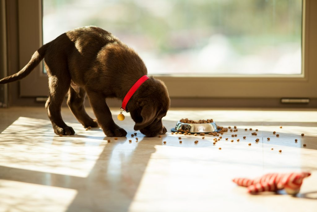 Everything You Need to Know About Feeding Puppies