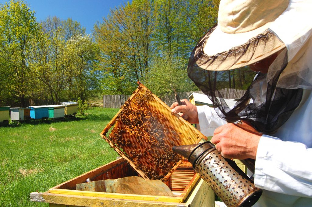 Tips for Painting Your Beehive